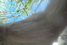 Videó – Állatságok