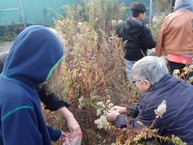 HarborLAB Facilities Manager Patricia Erickson shows students how to gather seeds without scattering them to the wind.