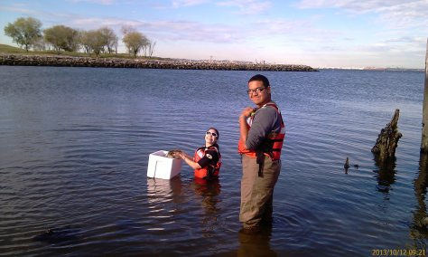 On October 12 we set off to restore eel grass at Brooklyn Pier's Park.