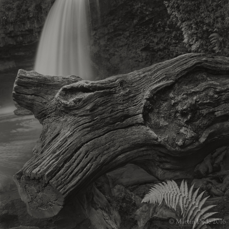 Waterfall, log and fern, Sgwd Gwladus, Brecon Beacons