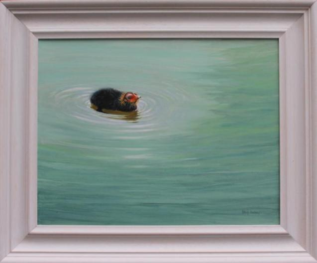 David Cowdry - 'Coot Chick- Framed