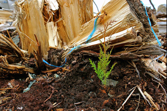 tree-planting-bevel_obstacle