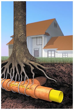 plumbing_tree-root-damage