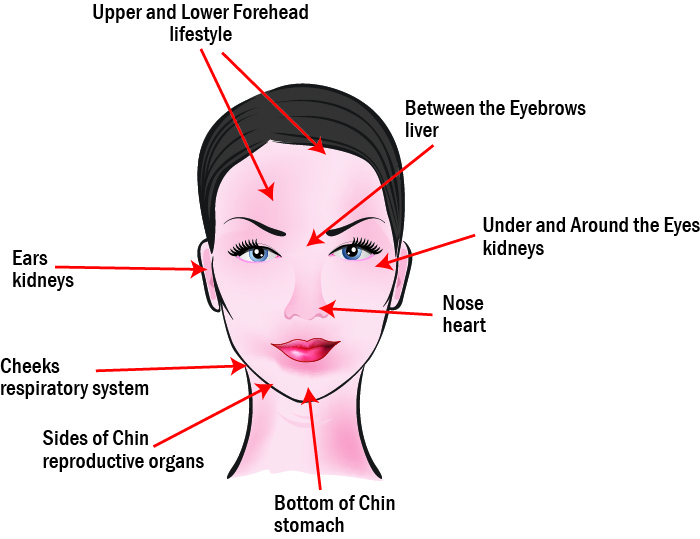 eyebrow pain diagram body pain diagram organs what does acne reveal about your health acne face map