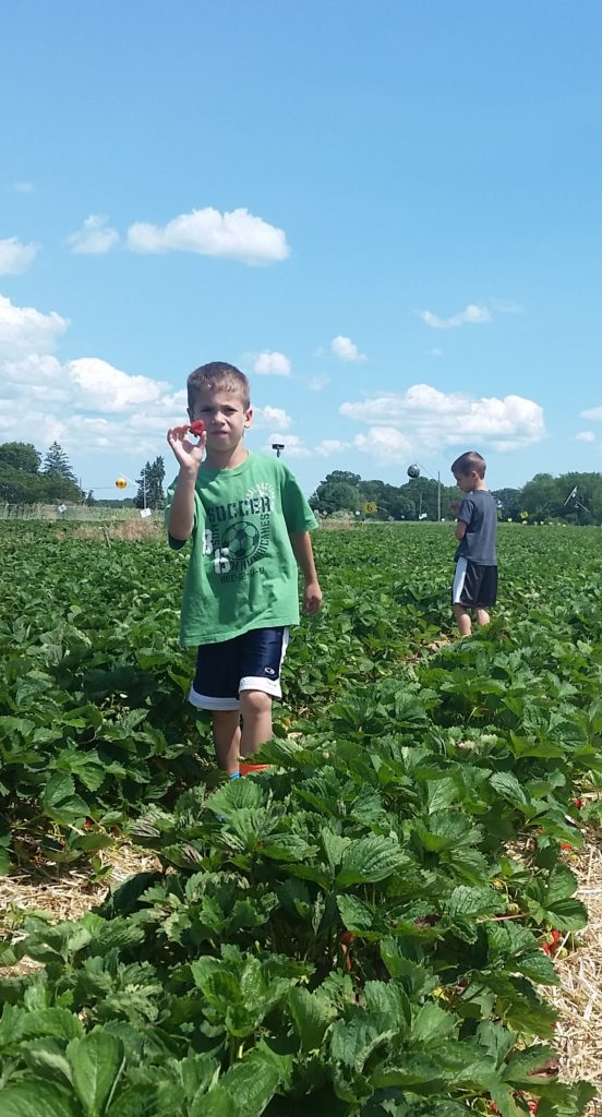 Strawberry Picking in June!