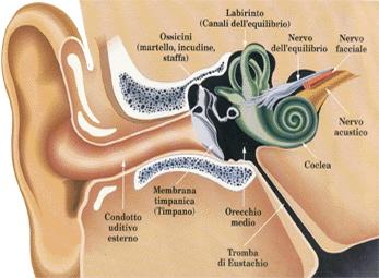 orecchio anatomia