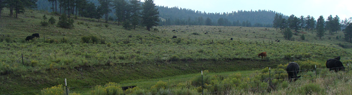 We keep a small herd of Angus-composite beef cattle on a 640-acre