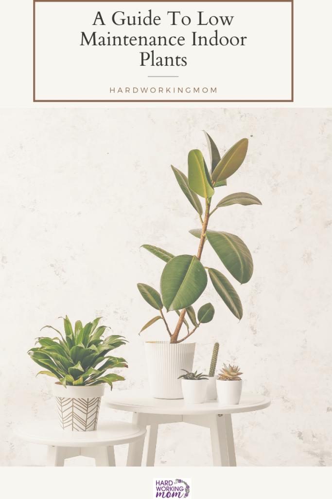 low maintenance indoor plants