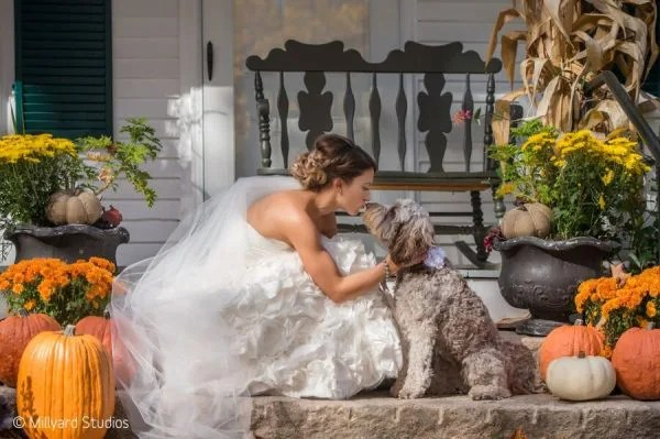 Bride kisses dog wedding day at Hardy Farm in Maine