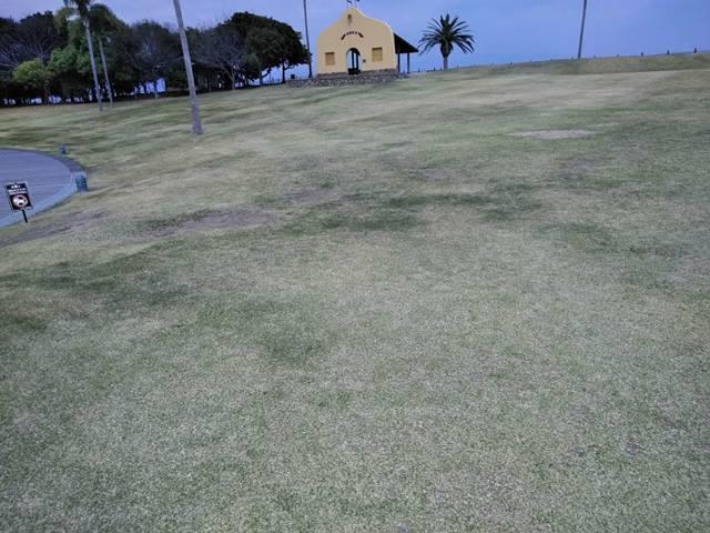人工島の芝生広場