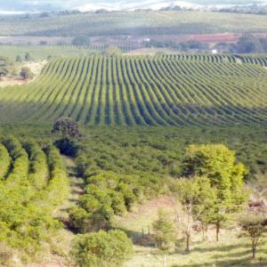 パライーゾ農園全景