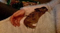 fast asleep..happy hare