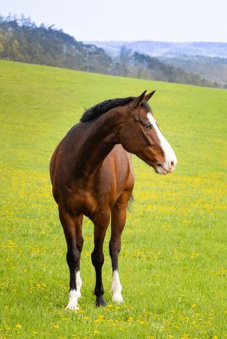 Equine Finance