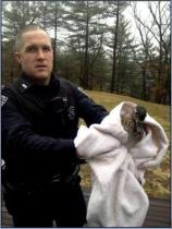Home intruder turns out to be a duck