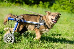 Arkansas Students Learn to Build Dog Wheelchairs