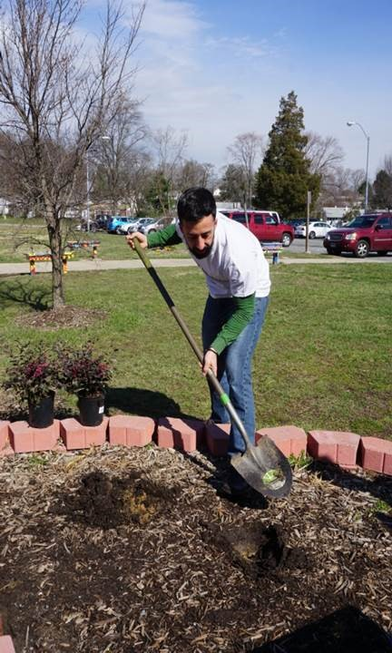Daniel Whipp, Office of Economic Development, helping with planting and landscaping
