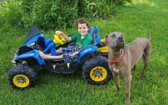 Pit Bulls Save Children From Venomous Snake Lurking in Their Yard