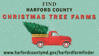 Harford County Offers Online Christmas Tree Farm Finder