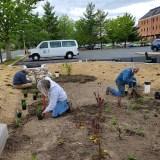 Harford County Builds Environmentally-Friendly Rain Garden in Bel Air