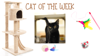 Cat of the Week – SCARLETT