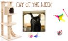 Cat of the Week – SCARLETT