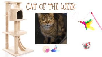Cat of the Week – JACK O'LANTERN
