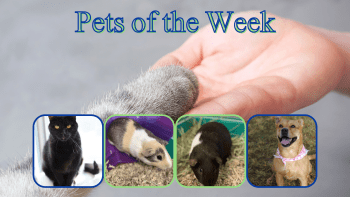 Pets of the Week for January 19, 2021