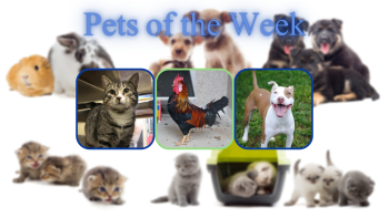 Pets of the Week for February 9, 2021