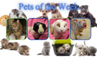 Pets of the Week for February 23, 2021