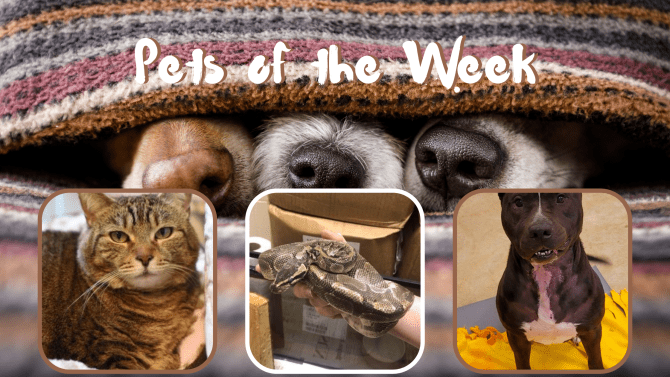 Pets of the Week for April 13, 2021