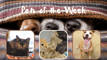 Pets of the Week for April 20, 2021