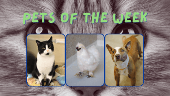 Pets of the Week for June 28, 2021