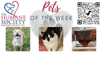 Pets of the Week for September 27, 2021