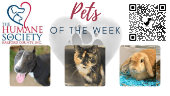 Pets of the Week for October 4, 2021