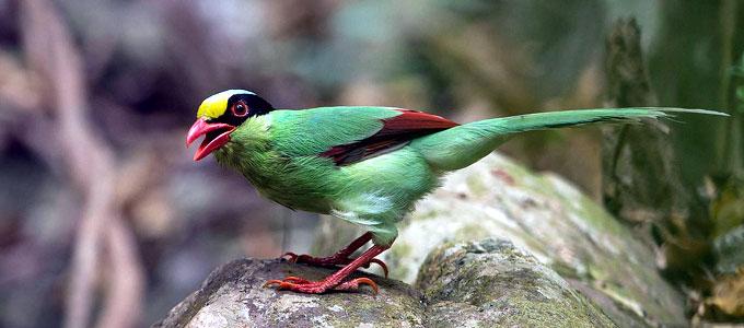 Info Terkini Harga Burung Ekek Keling Jawa Dan Kalimantan Daftar Harga Tarif