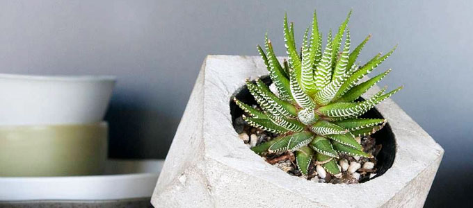 Harga Kaktus Mini Untuk Hiasan Rumah Daftar Harga Tarif