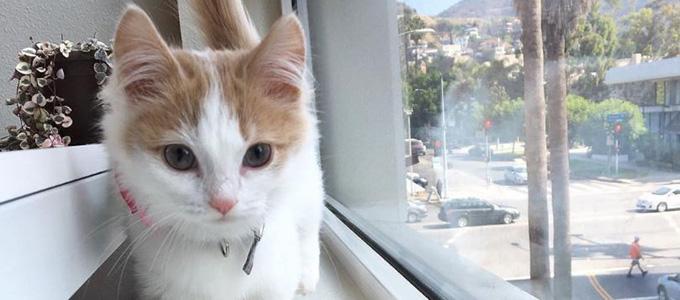 Info Harga Kucing Munchkin Jantan Betina Daftar Harga Tarif