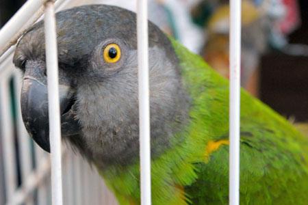 Apakah sangkar burung anda aman? Pilih politur untuk sangkar burung yang bagus.