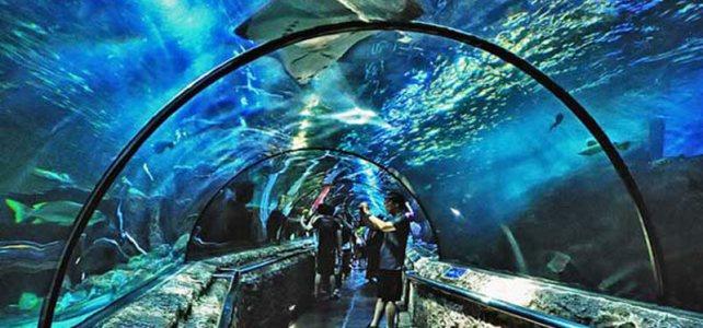 Harga Tiket Masuk Seaworld Ancol Terbaru Februari – Maret 2017