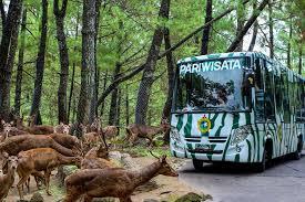 Harga Tiket Masuk Taman Safari Terbaru Februari – Maret 2017