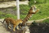 tiket masuk kebun binatang surabaya