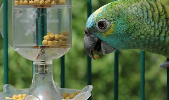 Parrot with pellets outside