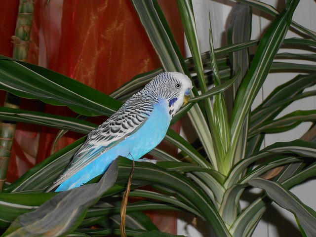 Bird Room Design Considerations Hari