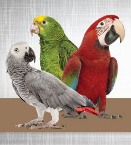 Tropican Alternative Formula provides proper daily nutrition for for Parrots who are less active or diet challenged.