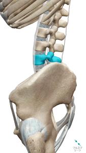 姿勢性腰痛の図