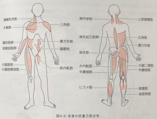 自律神経調整 全身の抗重力筋分布