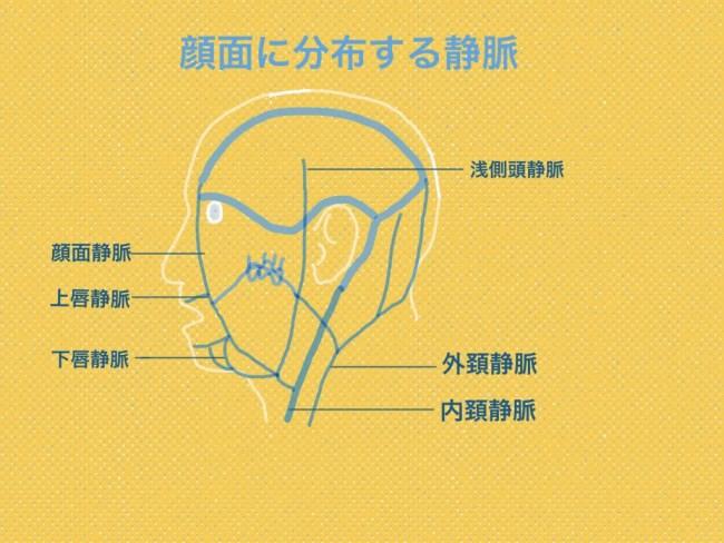 顔面 静脈