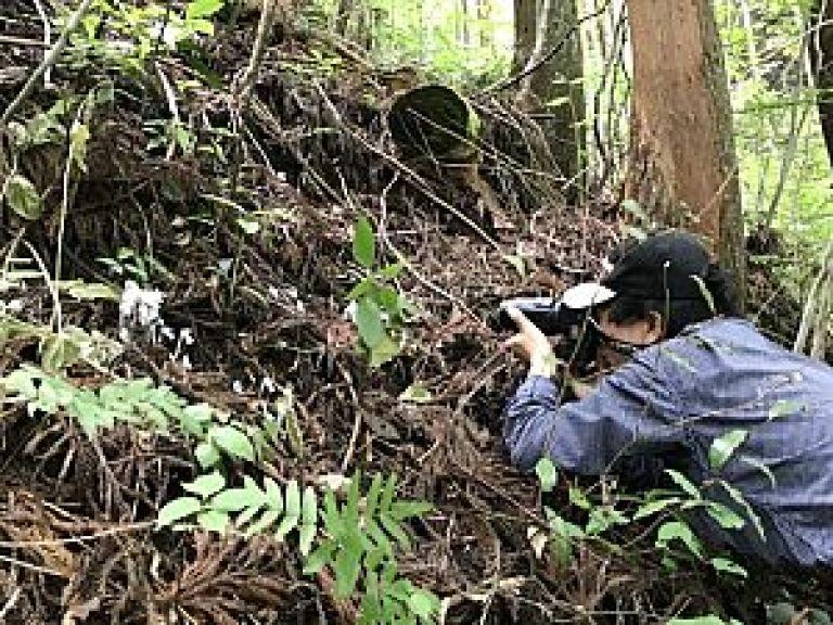 銀竜草を撮影される加藤先生