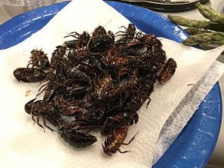 サツマゴキブリの素揚げ