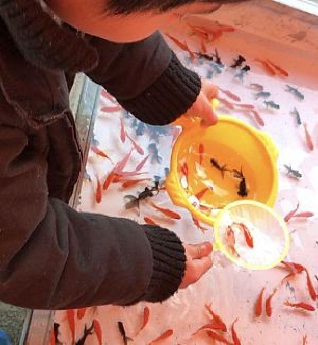 金魚すくいの写真